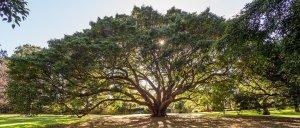 sydney-royal-botanic-garden